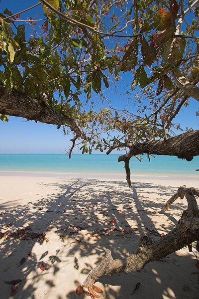 Collapsed Tree - Sarojin Beach