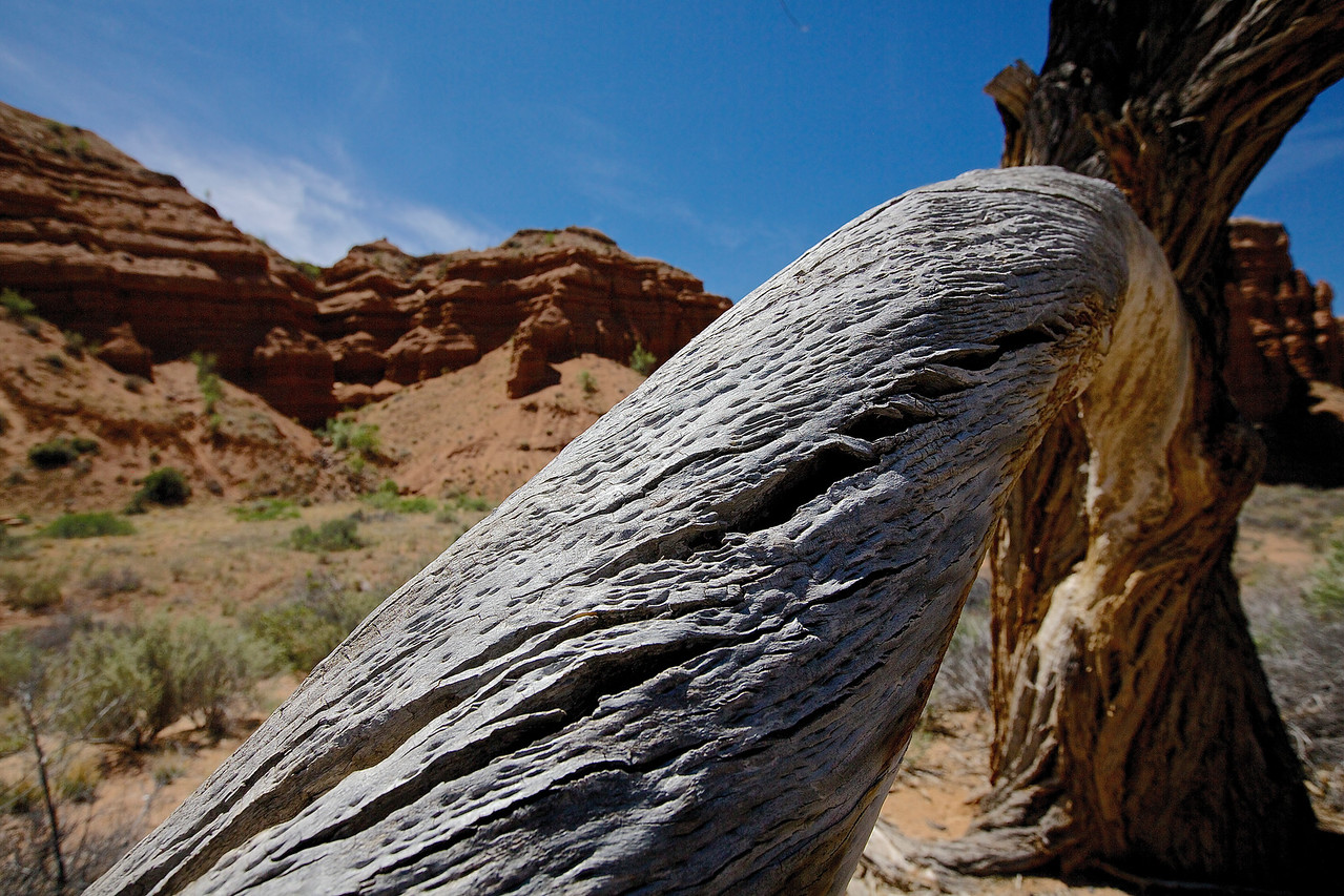 Dry Branch.  Approaching Capitol Reef National Park, Utah.