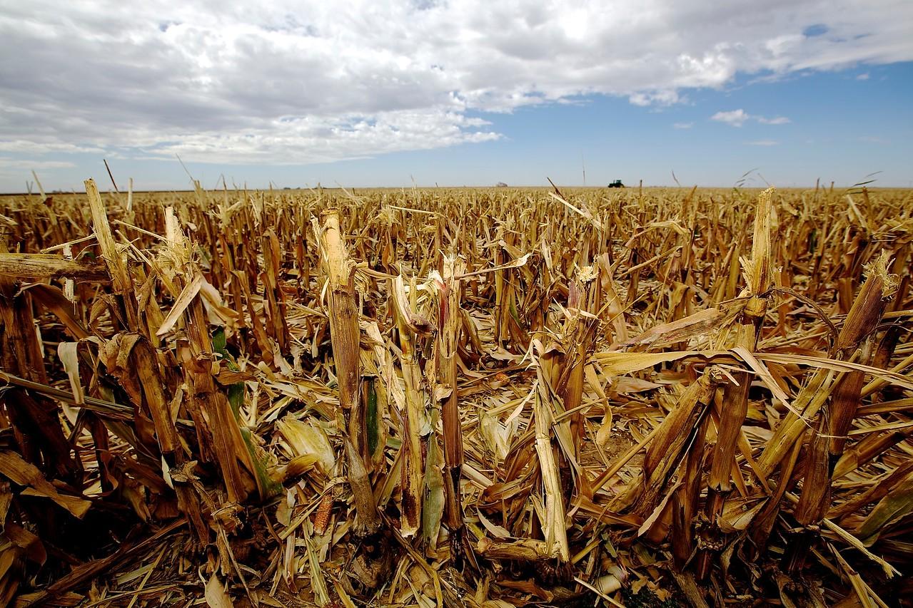 Harvest Stubble, West Texas