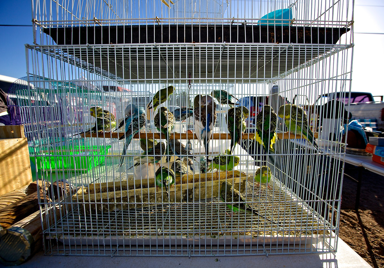 Caged Birds In An Open Market.  Hwy 2, El Paso, Texas