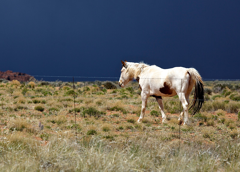 Horse.  Outside Page, Arizona.