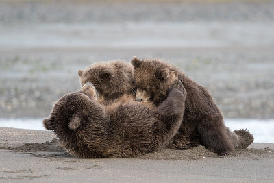 Nursing her Cubs, Alaska