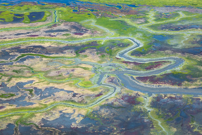 Algae blooms on the tidal flats