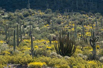 Lusch Cactus Garden, Arizona