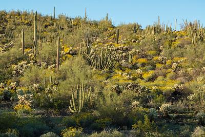 Desert in Spring