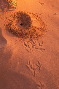 Bird tracks and anthill