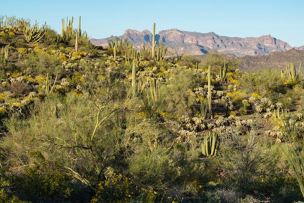 Dense Vegetation for a Desert.