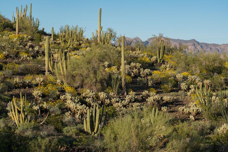 Desert Gardenscape