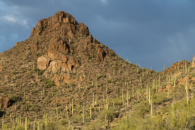 Storm Light on Saguaro