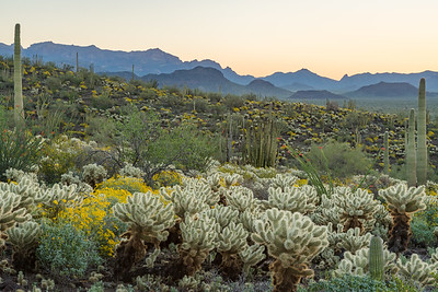 Dawn in Organ Pipe National Monument.