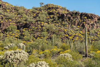 Springtime Desert Bloom