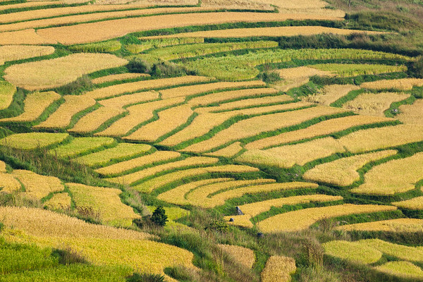 Patterns of Rice Terraces