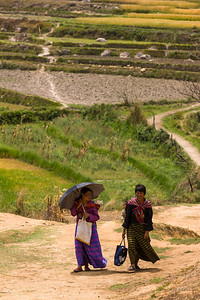 Women walking past fields, Bhutan.