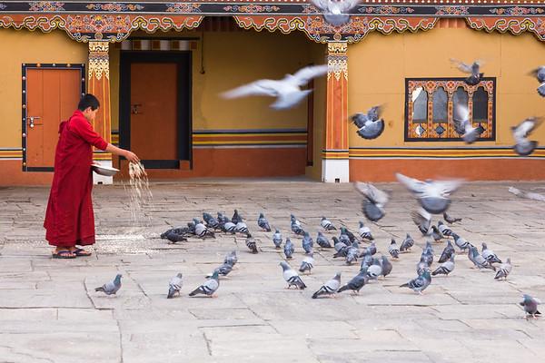Feeding the pigeons, Tashichho Dzong, Bhutan.