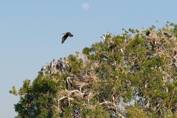 Bird Rookery on the Chobe River.