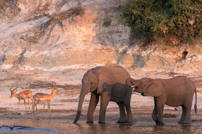 Water Draws Wildlife