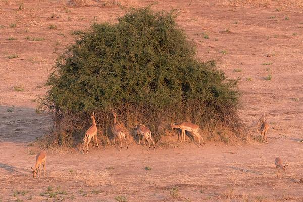 Browsing Line on Bush.