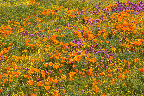 A Vibrant Meadow.