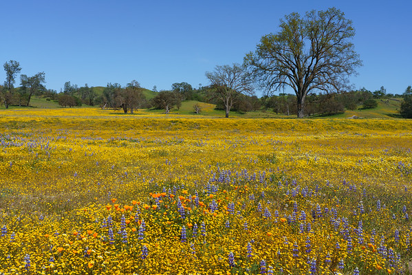 Springtime Meadow, California