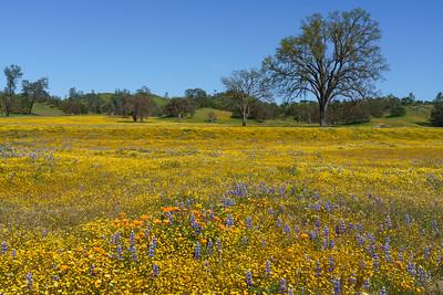 Springtime Meadow, California
