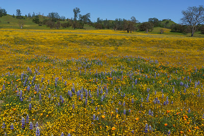 Springtime Meadow, California.