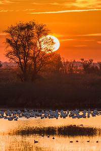 Dawn over Sacramento Valley National Wildlife Refuge, California.