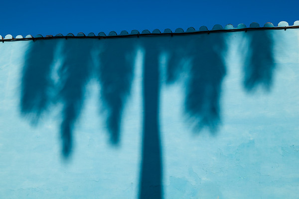 Shadow of Palm Tree.
