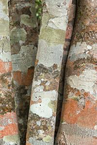 Tree Trunks with Lichen Patterns