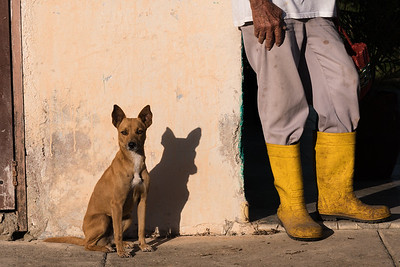 Dog and Yellow Boots