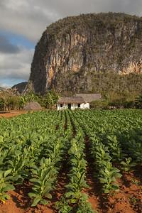 Tobacco Farm below Mogotes