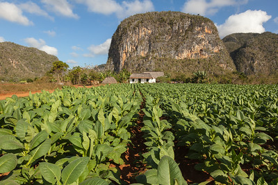 Tobacco Farm and Mogotes