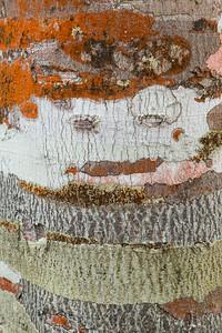 Tree Trunk with Lichen Patterns