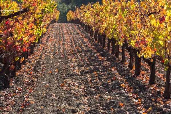 Vineyard Lane in Autumn