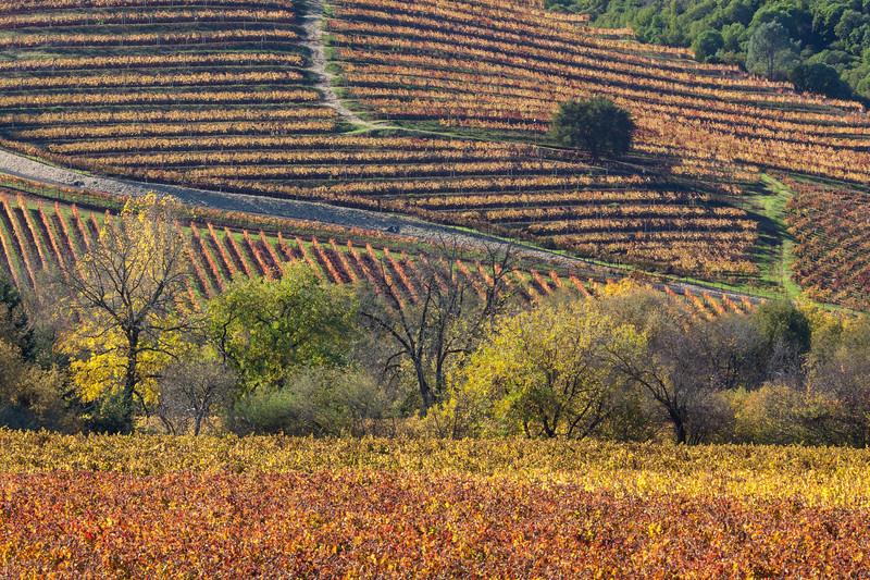 Patchwork of Vines
