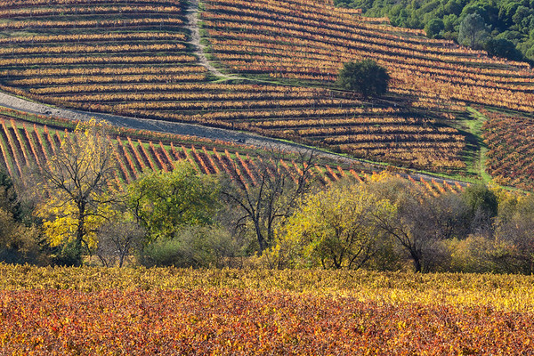 Patchwork of Vines