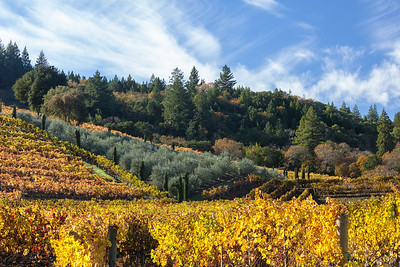 Wine Country Landscape