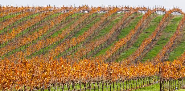 Rythmic Vines, California