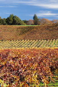 A Wine Country Autumn