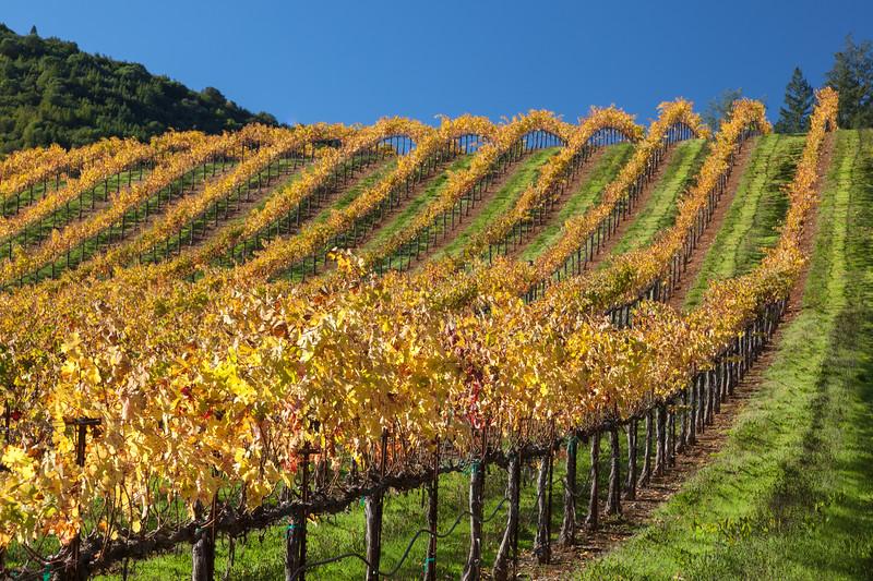Golden Sweeping Vines