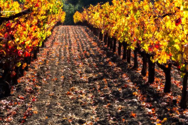 Vineyard Lane #2