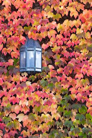 Vines and Lantern