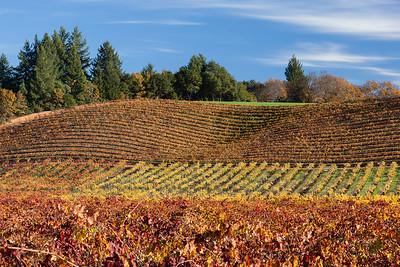 Wine Country Autumn