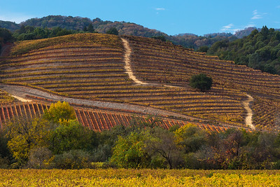 A Patchwork of Vines in Autumn