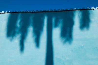 Shadow of Palm Tree.
