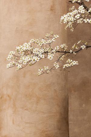 Dogwood Blossoms.