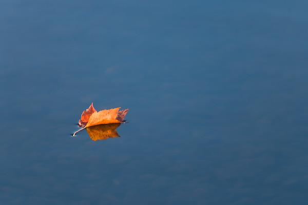 Leaf floating on Lake