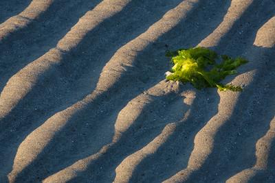 Beach Sand Ripples.