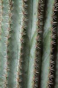 Cactus Pattern.