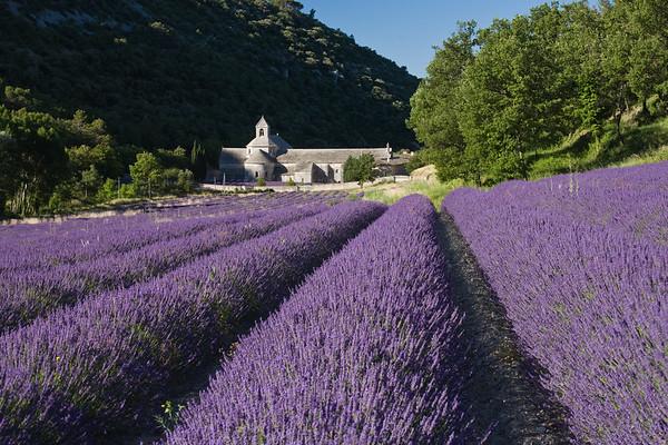 Senanque Monastery, France.