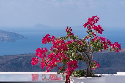 Brilliant Bougainvillea, Santorini.